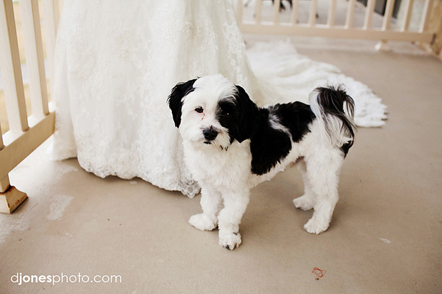 pet_wedding_plan03