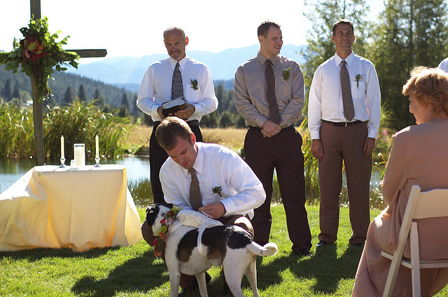 pet_wedding_plan05
