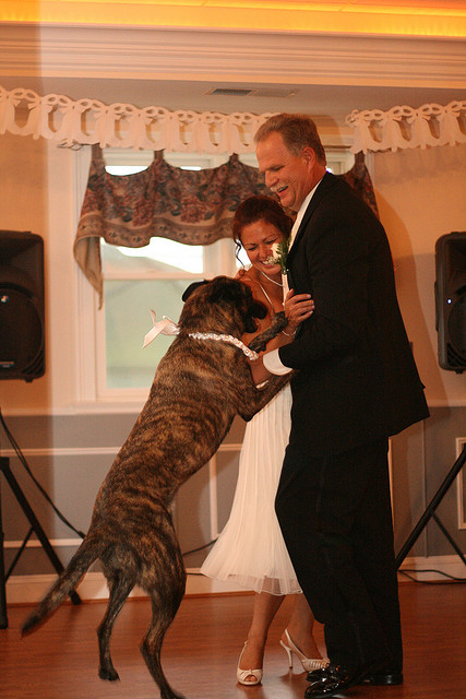pet_wedding_plan07