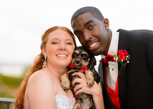 pet_wedding_plan10
