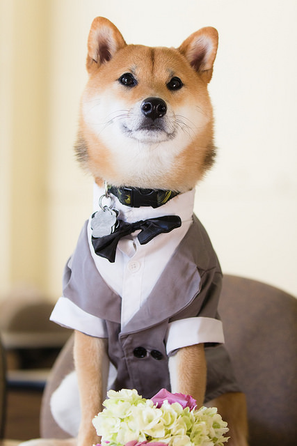 wedding_dog_dress01