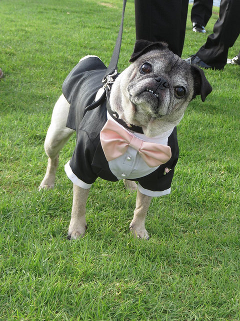 wedding_dog_dress03