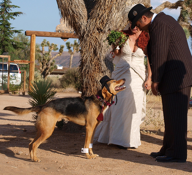 wedding_dog_dress04