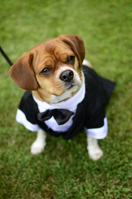 wedding_dog_dress11